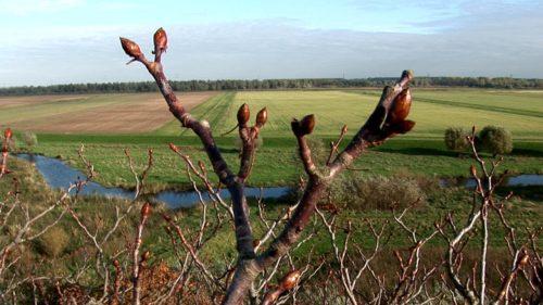 De Kastanjeboom en de Rivier